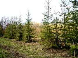 Купить деревья и кустарники питомник
